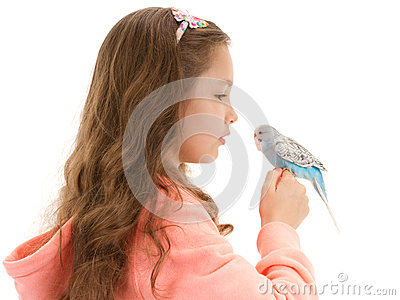 Girl speaking to tame pet bird budgerigar