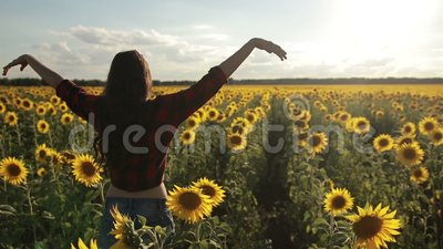 Girl standing with arms raised in sunflower field stock video footage