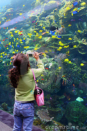 Free Girl Takes Picture At Aquarium Stock Images - 517524