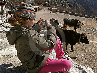 Girl taking photos of cows