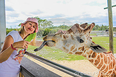 Woman touching giraffe