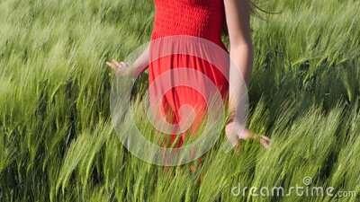 Girl or young woman standing among the growing green barley or triticale field stock footage