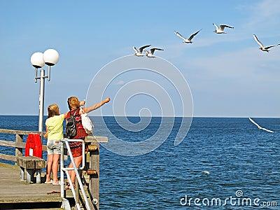 Girls feeding sea gulls Editorial Stock Photo