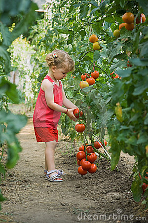 Free Girls Picked Tomatoes Stock Photography - 19608842
