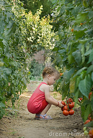 Free Girls Picked Tomatoes Stock Photos - 20235003