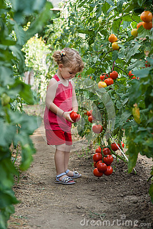 Free Girls Picked Tomatoes Stock Image - 29480201