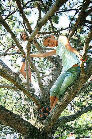Girls on tree limbs