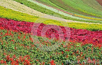 Gisement de fleur