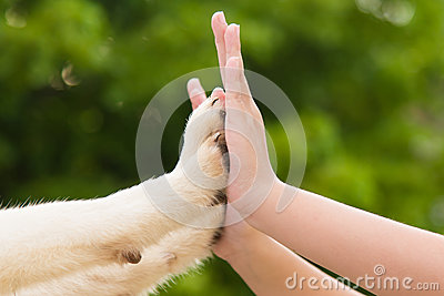 how to train a puppy to give paw