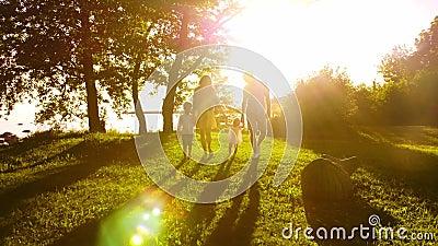 Glückliche Familie, die nahe dem Meer geht Feld und Bäume in der Landschaft Warme Farben des Sonnenuntergangs oder des Sonnenaufg stock video