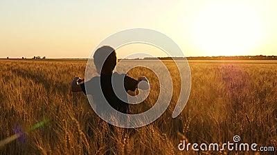 Glückliches Kind, das auf einem Weizenfeld bei Sonnenuntergang läuft Ein kleiner Junge, der auf einem Weizengebiet spielt Spornen stock video footage