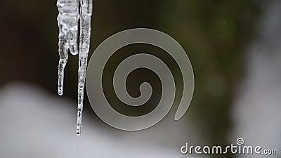 glacé au-dessus du bord de l'eau clips vidéos