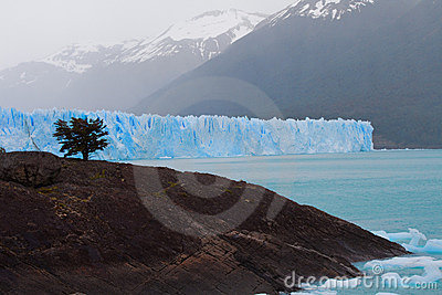 Glacier and Tree