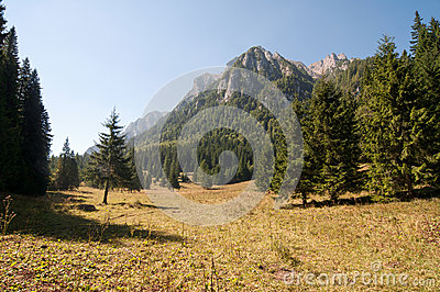 Glade in the Bucegi Mountains