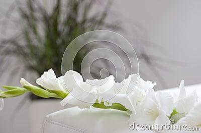 Gladiola flower on bed