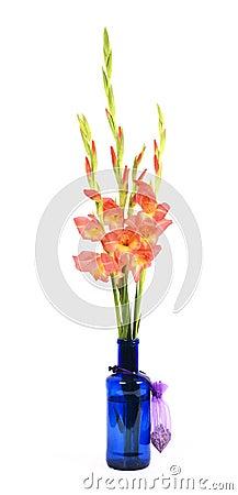 Gladiolus Branch