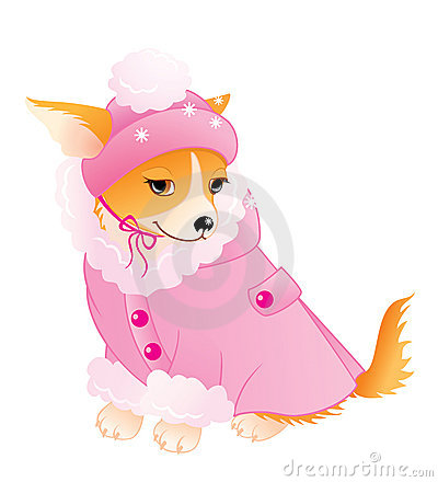 Glamour Chihuahua