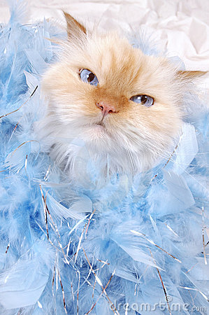 Free Glamour Kitty Stock Photography - 511822
