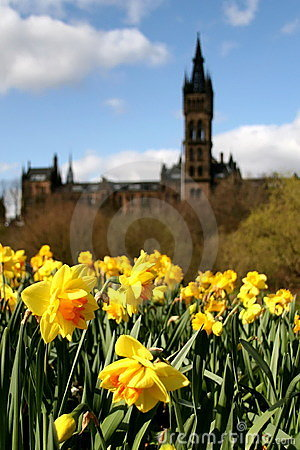 Glasgow, The University with Daffodils