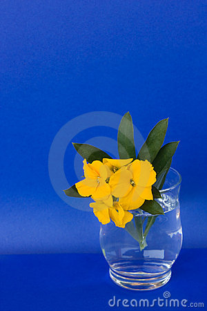 Glass With Aegean Wallflower (Erysimum cheiri)
