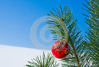 Glass ball on christmas tree