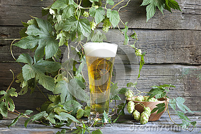 Glass of beer with hop