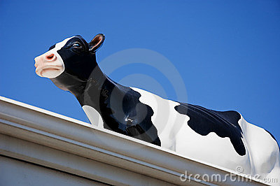 Glass Black and White Cow on Roof