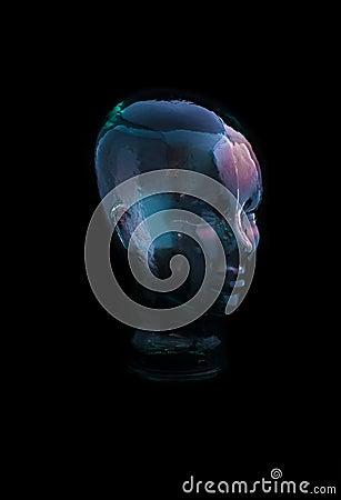 Glass huvud