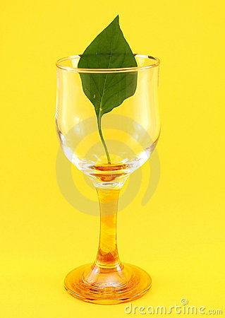 Glass with leaf