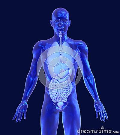 Glass Man with Internal Organs
