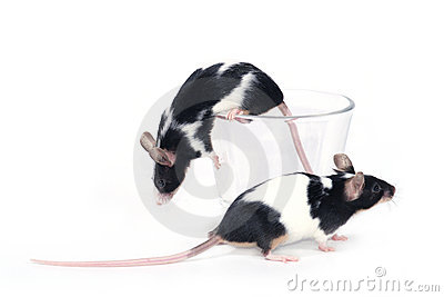 Glass of... mice