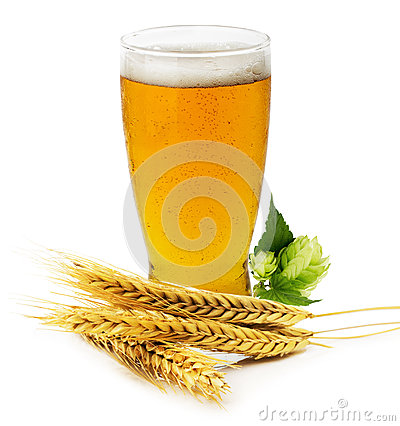Free Glass Of Fresh Beer With Green Hops And Ears Of Barley Isolated Royalty Free Stock Images - 44080679
