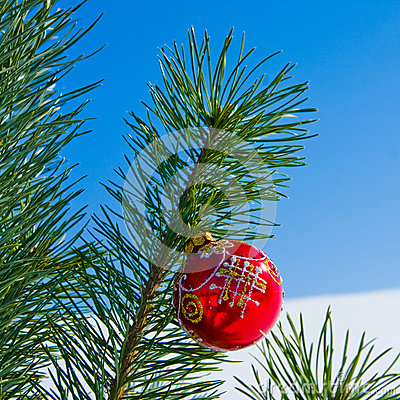 Glass red ball on christmas tree