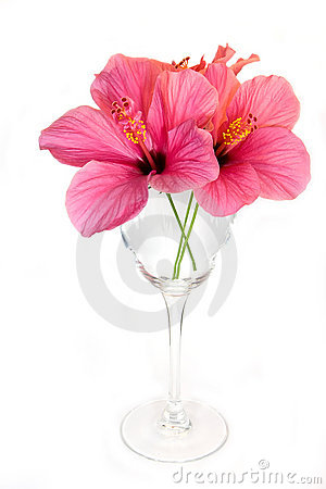 Free Glass With Flower Royalty Free Stock Images - 7466619