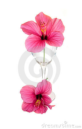 Free Glass With Red Flower Stock Photo - 7466550
