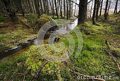 Glen Etive Forest