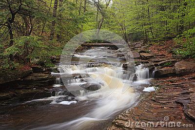 Glens Natural Area, Ricketts Glen State Park PA