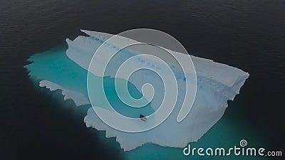 Gli animali nuotano nella baia su un iceberg Andreev stock footage