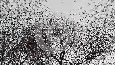 Gli uccelli volano via stock footage