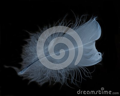 Glo feather