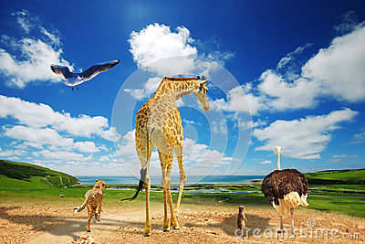 Global warming - animals migrating