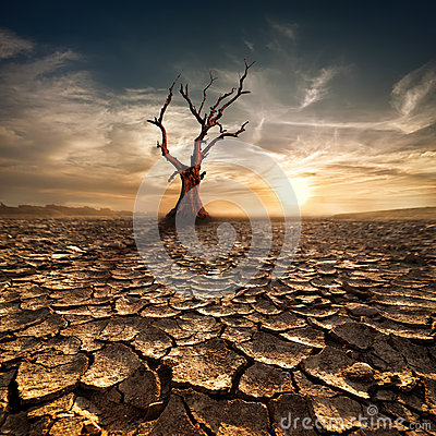Free Global Warming Concept. Lonely Dead Tree Under Dramatic Evening Stock Photography - 39102432