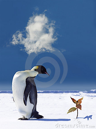 Free Global Warming In Antarctica Royalty Free Stock Photo - 1732325