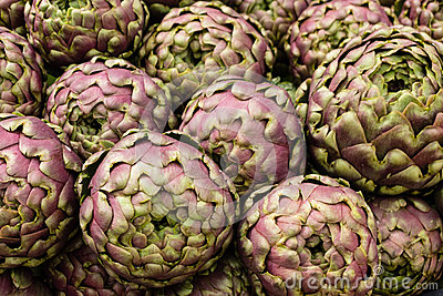 Globe artichoke, Cynara cardunculus