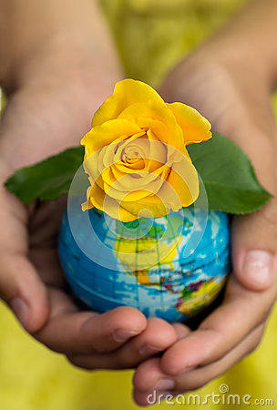 Free Globe In Hand With Yellow Rose Blooming. Royalty Free Stock Images - 84550979