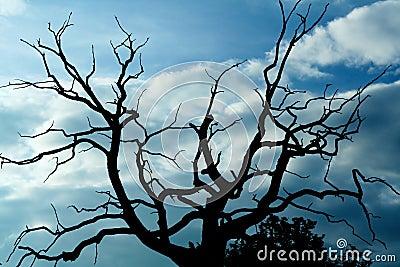 Gloomy dead tree