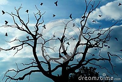 Gloomy dead tree, crows
