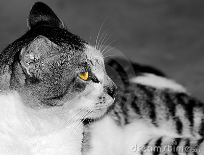 Glow in the Cat s eye