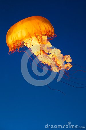 Glowing Jellyfish