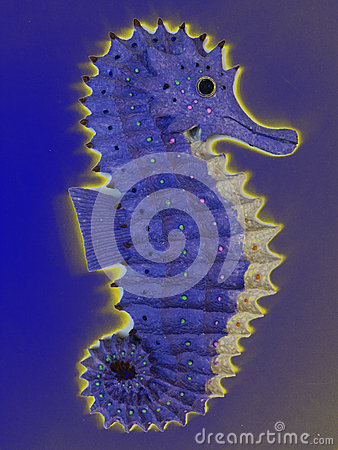 Glowing seahorse